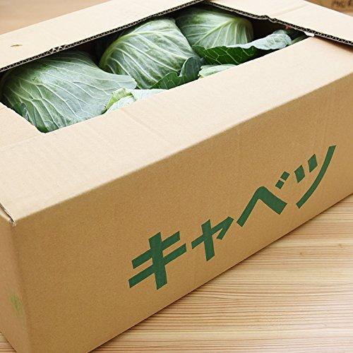 熊本県産 ( 九州 ) キャベツ 1ケース 6〜8玉入 新鮮 生 産地直送