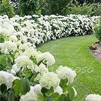 9:50ピース/バッグ日本のツツジ種子シャクナゲツツジの花種子木の種子カバー花15色盆栽diy植物ホームガーデン