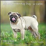 Der Mops The Pug Dog 2020 - Broschuerenkalender - Wandkalender - mit herausnehmbarem Poster