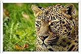 Leopardのルックのティンサイン 金属看板 ポスター / Tin Sign Metal Poster of Leopard Look