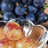 長野県産 巨峰 種なし ぶどう 芳醇な甘み 贈答用 産地直送 ギフト (2kg 4房入り)