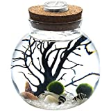 """White Crystal LED Marimo Aquarium Kit - 4.3"""" x 4.5"""" Glass Bowl with 12mm Moss Balls Crystal Gravels Sea Fan Tiny Seashells Prefect Gifts for Office Desk Decor Centerpiece Tabletop"""