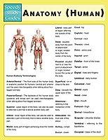 Anatomy (Human) (Speedy Study Guide)