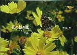 花の揺り籠 Flower Cradle 画像