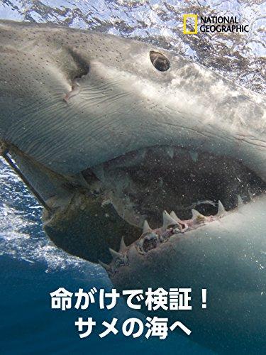 命がけで検証!サメの海へ