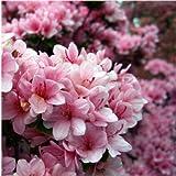 「12か月の花香水」 東山植物園の自然の花の香りから生まれた香水です。 (4月 ツツジ)