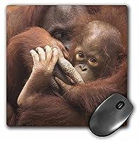 3droseフロリダ州、Pensacola、オランウータンat動物園、us10jwl0001、Joanne Wellsマウスパッド( MP _ 89194_ 1)