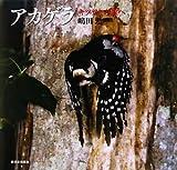 アカゲラ―キツツキの森へ (日本の野鳥)
