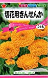 【種子】切花用きんせんか 花 トーホクのタネ