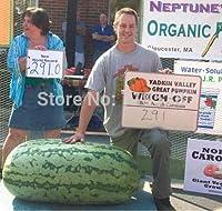 果物の盆栽10個巨大なスイカの盆栽 - 巨大な200ポンド、ホームガーデニング、!