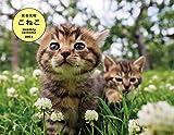 岩合光昭 こねこ monthly calendar 2021 ([カレンダー])