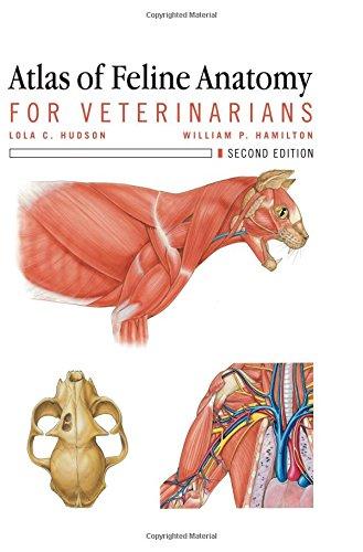Download Atlas of Feline Anatomy For Veterinarians 1591610443