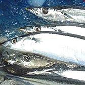 トロ秋刀魚2kg詰(13尾前後)