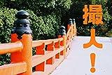 とりんちゅ!: 神宮参拝録(前)