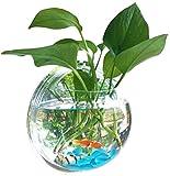壁掛け アクアリウム 水槽 インテリア 観葉植物 金魚鉢 花瓶 観賞 ガーデニング 半球型 透明 (小)
