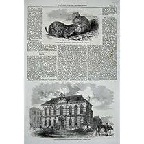 プレーリードッグの動物園かき立て trent の 1860 の Minton 博物館