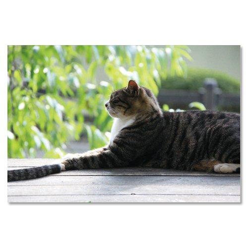 東京の猫ポストカードシリーズ Cat in Tokyo 024〈新宿御苑〉...