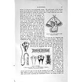 自然史 1896 の人間のサナダムシの Pilidium の幼虫の卵