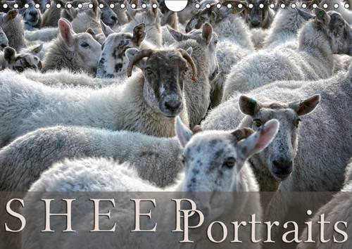 Sheep Portraits 2017: Discover 12 Beautiful Portraits of Sheep in the Countryside (Calvendo Animals)
