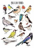 英国鳥類 British Birds silk fabric poster シルクファブリックポスター 44cm x 33cm