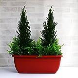 ゴールドクレスト  プランター 屋外使用可 人工観葉植物 skd-500