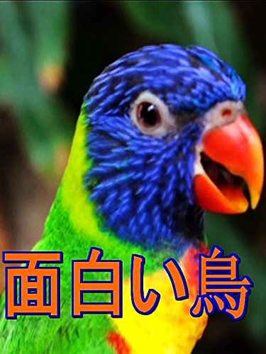 ビデオクリップ: 面白い鳥