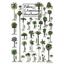 Heritageパズル–ロバート・オブライエン–アメリカ南東のPalms–ジグソーパズル–550Pc