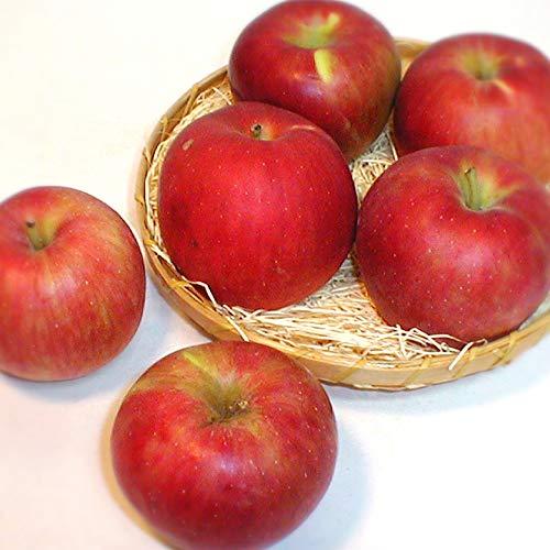 青森・長野産 紅玉リンゴ こうぎょくりんご 約10kg 小玉46〜50個入り ご家庭用