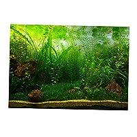 B Blesiya 魚タンク 水族館 ステッカー ポスター 背景 装飾 水生植物 3D効果 自己接着 全6サイズ - 61x30cm