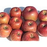【訳あり・ジュース用】岩手県産 または 青森県産 りんご 5kg (ジュース用・果肉柔らかめ)