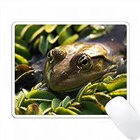 水、ルーマニアの水泳ドナウ川デルタのマーシュカエルのクローズアップ PC Mouse Pad パソコン マウスパッド