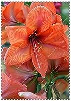 8:200個/バッグアマリリスの種、在来種Hippeastrum花弁アマリリス、ホームガーデン用の盆栽の花の種