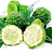 キーライム植物、シトラスオーランティフォリアフロア、盆栽ホームガーデンのための有機果樹plantas、成長しやすい、50pcs / bag