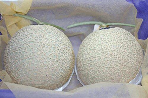 静岡産 マスクメロン 中玉2玉 化粧箱入