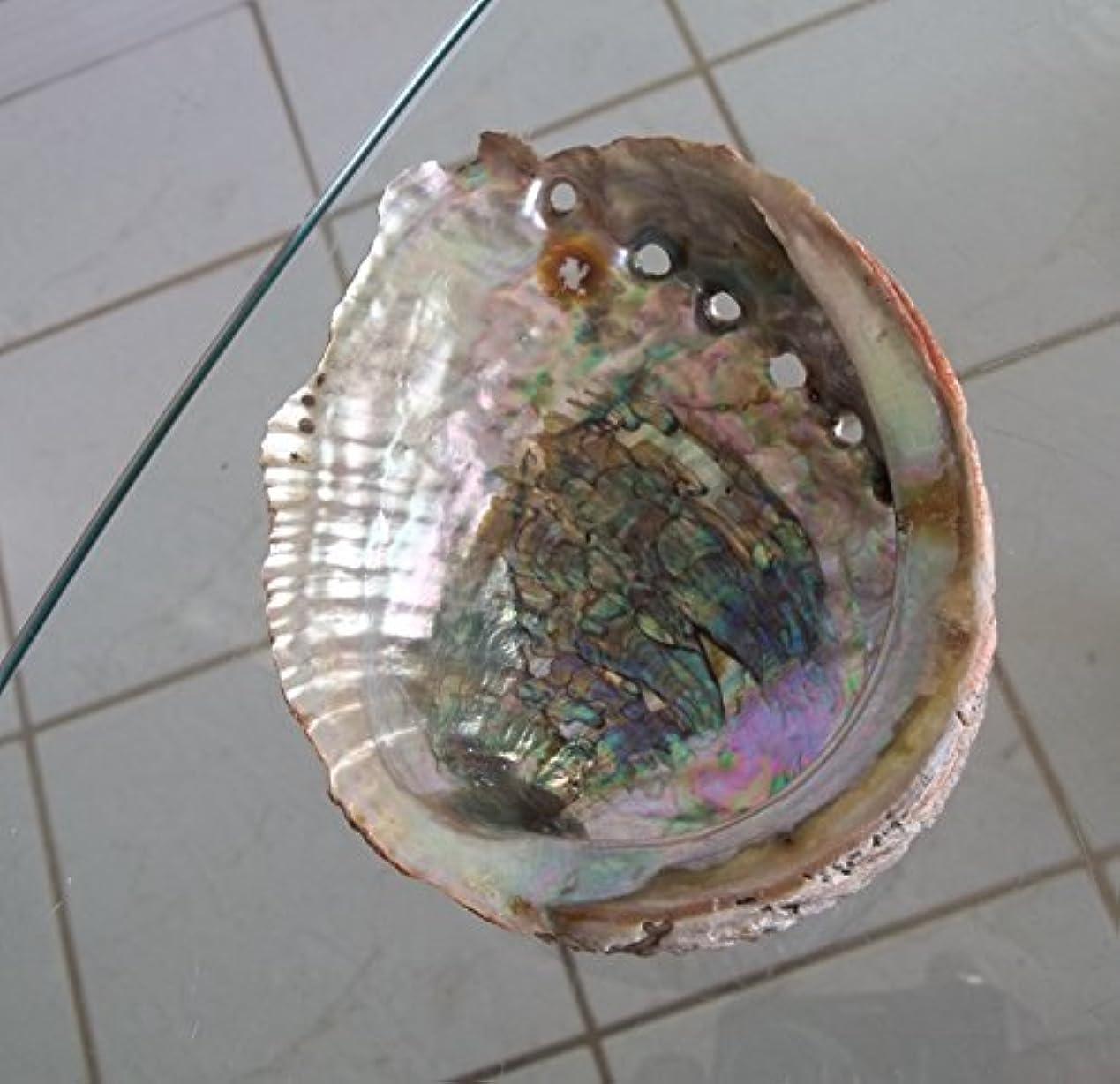 急降下チチカカ湖生き物Abalone Shell Incense Burner