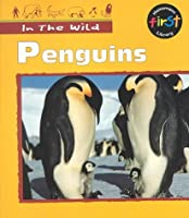 Penguins (In the Wild)