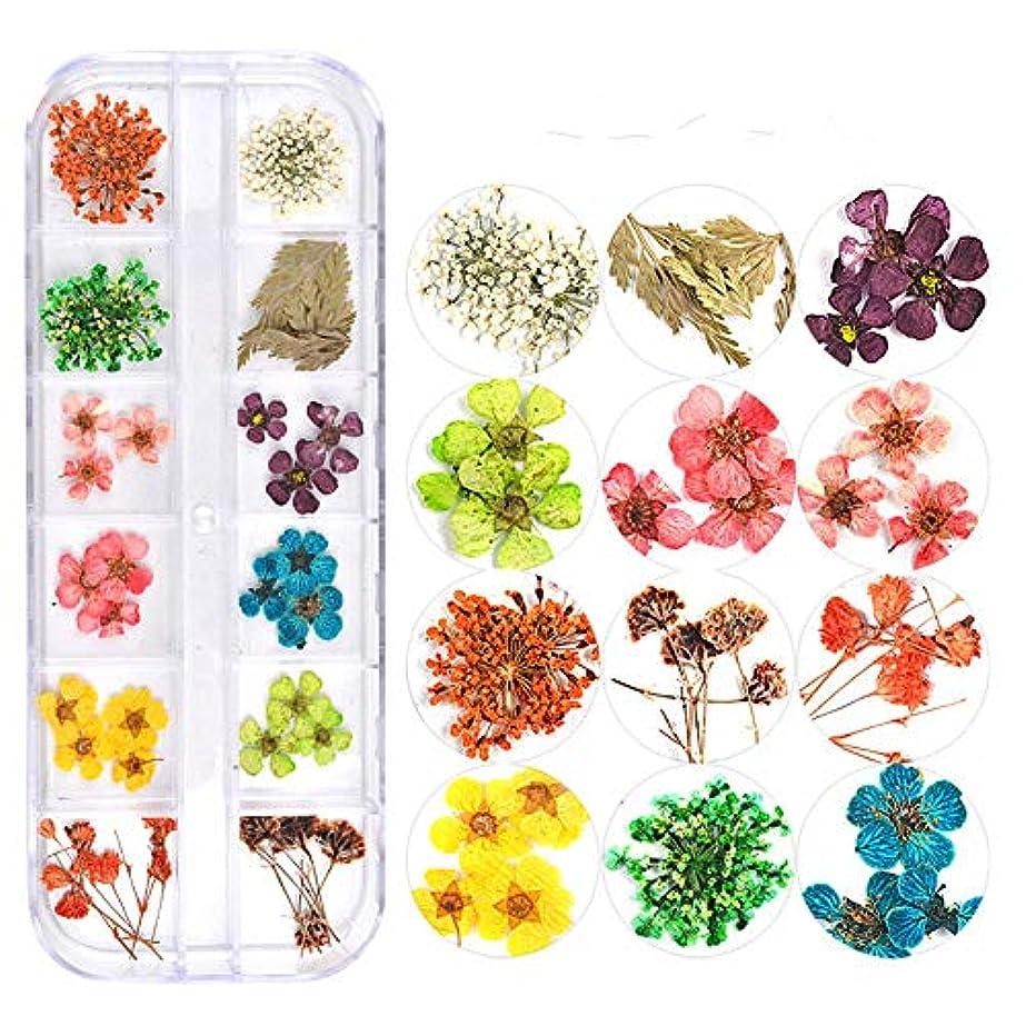 ジョージハンブリー狼元気な押し花 ドライフラワー 3Dネイル レジンデコレーション DIYデコレーション飾り用品 (3)