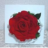 赤い薔薇のプリザーブドフラワー 壁掛け アレンジ シンプル インパクト 置き型 2WAY A ラッピング付 手提げ袋付