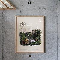 Botanical Palm Print OAK FRAME ボタニカルパームプリントオークフレーム W30×H40cm(ポスター別売り)