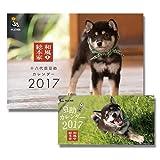 和風総本家豆助 【壁掛け&卓上SET】 2017年度カレンダー 17CL-0356-0357