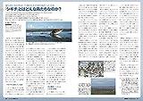 BIRDER(バーダー)2019年9月号 シギ・チドリ観察のキホン 画像