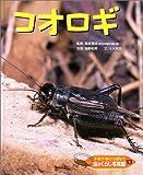 ドキドキいっぱい!虫のくらし写真館〈13〉コオロギ