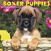 Just Boxer Puppies 2020 Calendar