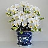 造花の胡蝶蘭 鉢植え 光触媒 Sサイズ-5本立 H50cm(白/花弁・黄-青のデザイン鉢)