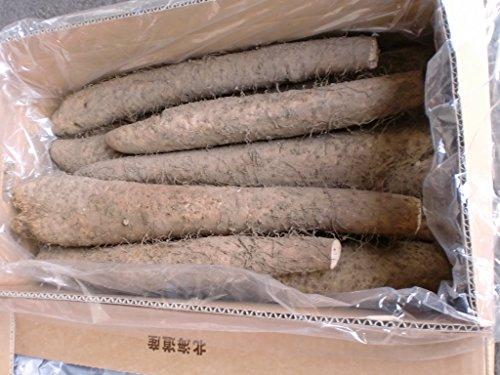 北海道夕張産 「長いも」訳あり B大サイズ 10kg