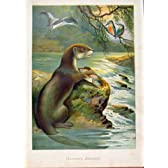 説明されたロンドン Almanack の性質の釣り人のアナグマ