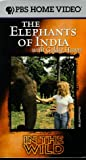 In the Wild: Elephnats of India With Goldie Hawn [VHS] [Import]