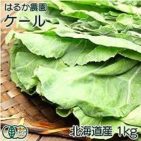 【クール冷蔵便】ケール 1kg 有機JAS (北海道 はるか農園) 産地直送