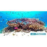 Ultra HD Blu-ray 4K Gelatin Sea (4K, HDR)