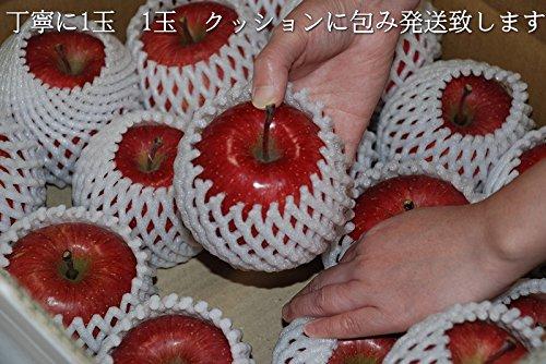 送料無料 贈答用 青森 りんご 秀品 サンふじ2㎏ (約8玉)